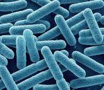 Реакция на лекарства зависит от кишечных бактерий