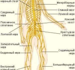 Признаки и лечение сирингомиелии