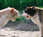 Психологи советуют супругам орать друг на друга одинаково громко