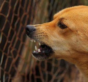 В Канаде разразился скандал из-за «лечения» ребенка слюной бешеной собаки