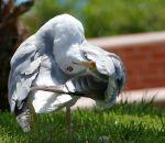 11 болезней, опасных на отдыхе: объясняем на чайках