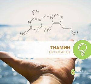 Что такое тиамин — в каких продуктах содержится, дозировка, механизм действия на организм человека