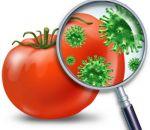 Основные виды пищевых инфекций