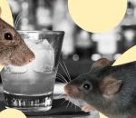 Американские ученые определили эффективный способ борьбы с алкогольной зависимостью