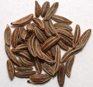 Полезные для здоровья свойства тмина и противопоказания для его применения