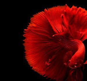 Японские ученые обнаружили у рыб признаки самосознания