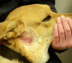 Инфекционный дерматит: симптомы, причины и лечение