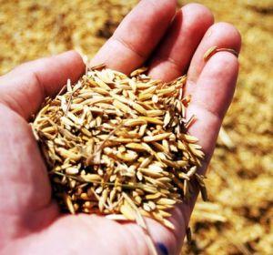 Зерна, отруби и клетчатка защищают от рака печени