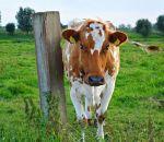 В молоке нашли угрозу человечеству
