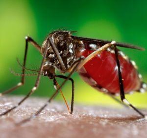 Укусы комаров и мошки у детей: чем лечить, чем снять зуд и красноту