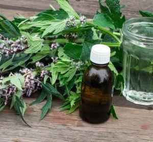 Пустырник — лечебные свойства и противопоказания, применение в таблетках, настойке, отваре и чае