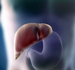Признаки болезни печени — основа диагностического поиска!