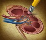 Острый пиелонефрит – лечение медикаментозной терапией, фитотерапией и диетой