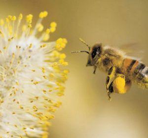 Аллергические реакции на пыльцу