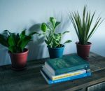 Комнатные растения оказались бесполезными