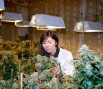 Употребление марихуаны может снизить уровень дофамина в мозгу