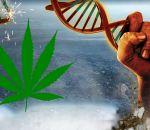 Употребление марихуаны изменяет ДНК, увеличивая риск заболеваний
