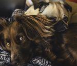 Собаки осознают собственное непонимание