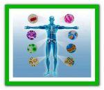 Ревматическая полимиалгия — признаки и проявления, терапия медикаментами и народными средствами