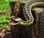 Как помочь больному при укусе змеи?