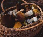Роспотребнадзор предостерег россиян ототравления грибами