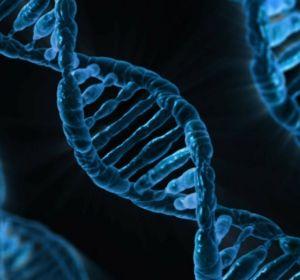 Загадки митохондрий: зачем человеку второй геном