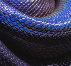 Укушенный змеей фермер испугался смерти иотрубил себе палец