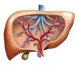 Стеатогепатит — причины, признаки, симптомы и лечение