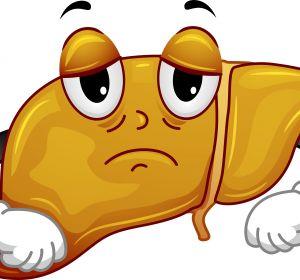 Лечение жирового гепатоза печени народными средствами и медикаментами