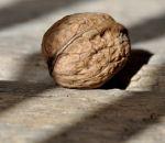 Пользу грецких орехов подтвердили научно