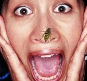 Что делать после укуса осы?