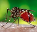 Как защитить ребенка от укусов комаров: народные средства для детей до года и старше