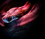 Мальчика с «чешуей» повсему телу прозвали змеей из-за редчайшей болезни
