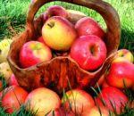 Чем яблоки полезны для организма?