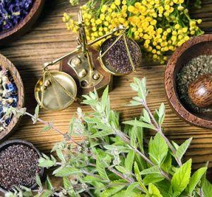 Боровая матка при климаксе — лечебные свойства травы для лечения синдромов и портивопоказания