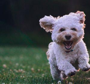 Собаки защищают хозяев от инфаркта