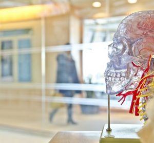 Остановить маньяка поможет мозговой имплантат