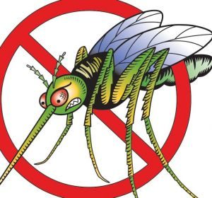 Укусы комаров: современные и народные средства от укусов комаров, аллергия на комариные укусы