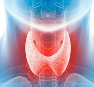 Гормон щитовидной железы Т4 — показания к проведению анализа