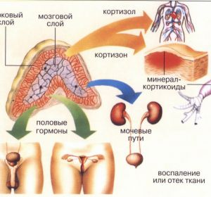 Адреногенитальный синдром у детей — тип наследования, признаки, диагностика и терапия
