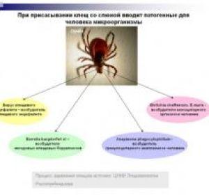 Укус клеща — признаки и симптомы, возможность заражения энцефалитом и боррелиозом, профилактика