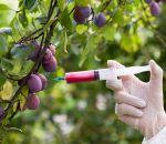 Россияне не хотят покупать даже дешевые продукты с ГМО