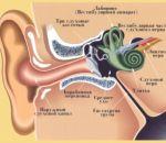 Баротравма — причины, признаки, симптомы и лечение