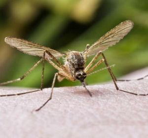 Первая помощь при укусе насекомого