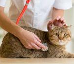 Эритроцитоз первичный и вторичный — диагностика и как лечить