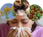 Мазь от аллергии на коже — перечень антигистаминных препаратов с описанием состава, отзывами и ценами
