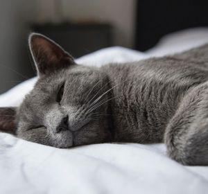 Эксперимент: как недостаток сна влияет нанашу психику