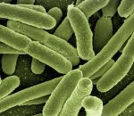 Материал сживыми бактериями напечатали на3D-принтере