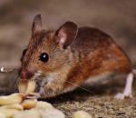 Ученые остановили болезнь Паркинсона у мышей