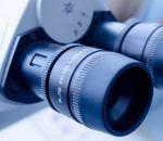 Найдено вещество, ослабляющее защиту раковых клеток